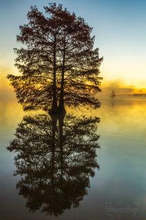 Arkansas, Arkansas landscapes, Harris Brake Lake, bald cypress, cypress tree, orange, reflections, dawn, fog, swamp, bayou