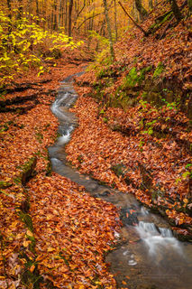 fall, autumn, Ozark National Forest, Ozarks, fall color, leaves, stream