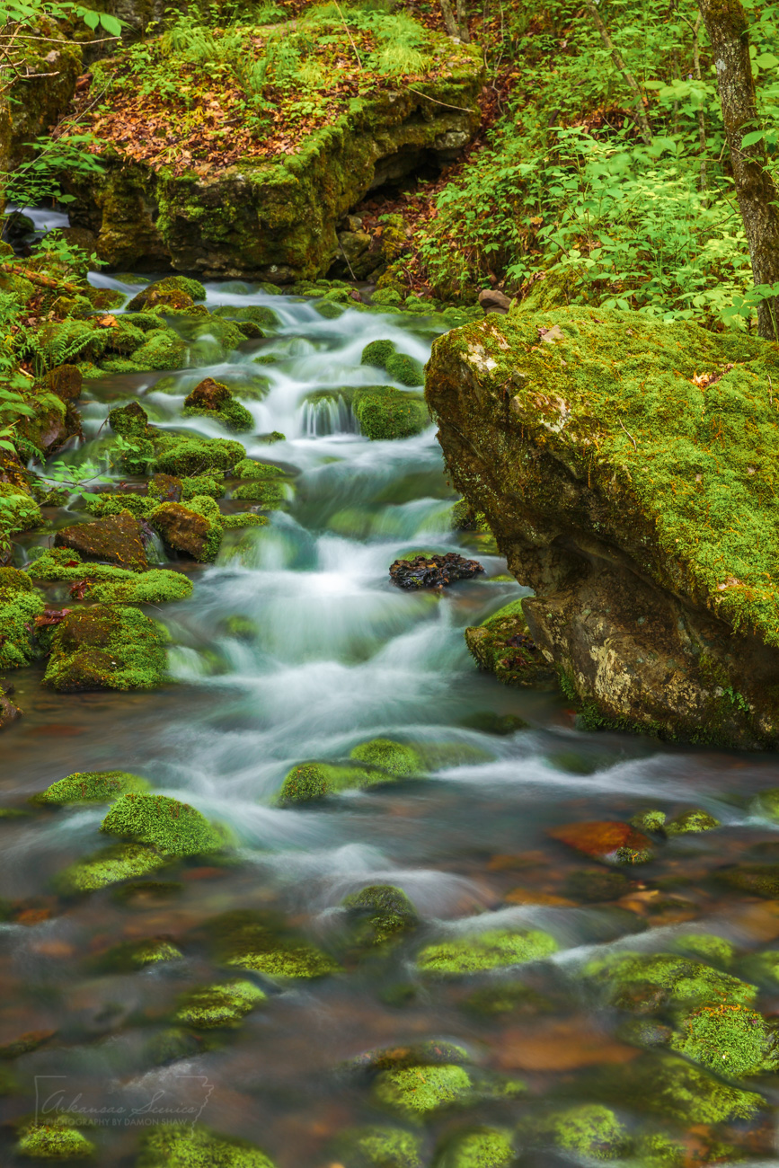 A spring flows out of Big Creek in the Ozark National Forest.