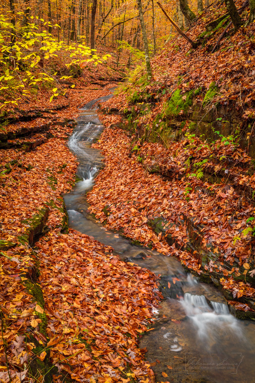 fall, autumn, Ozark National Forest, Ozarks, fall color, leaves, stream, photo