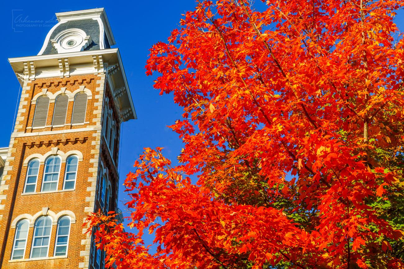 Old Main, University of Arkansas, Fayetteville, Fayetteville Arkansas, maple tree, , photo