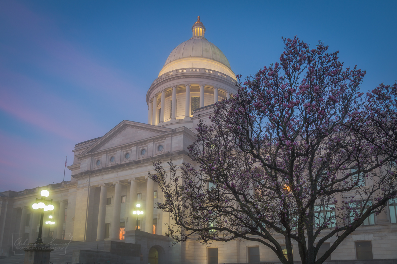 Arkansas State Capitol, Arkansas politics, Little Rock, tulip tree, state capitol, photo