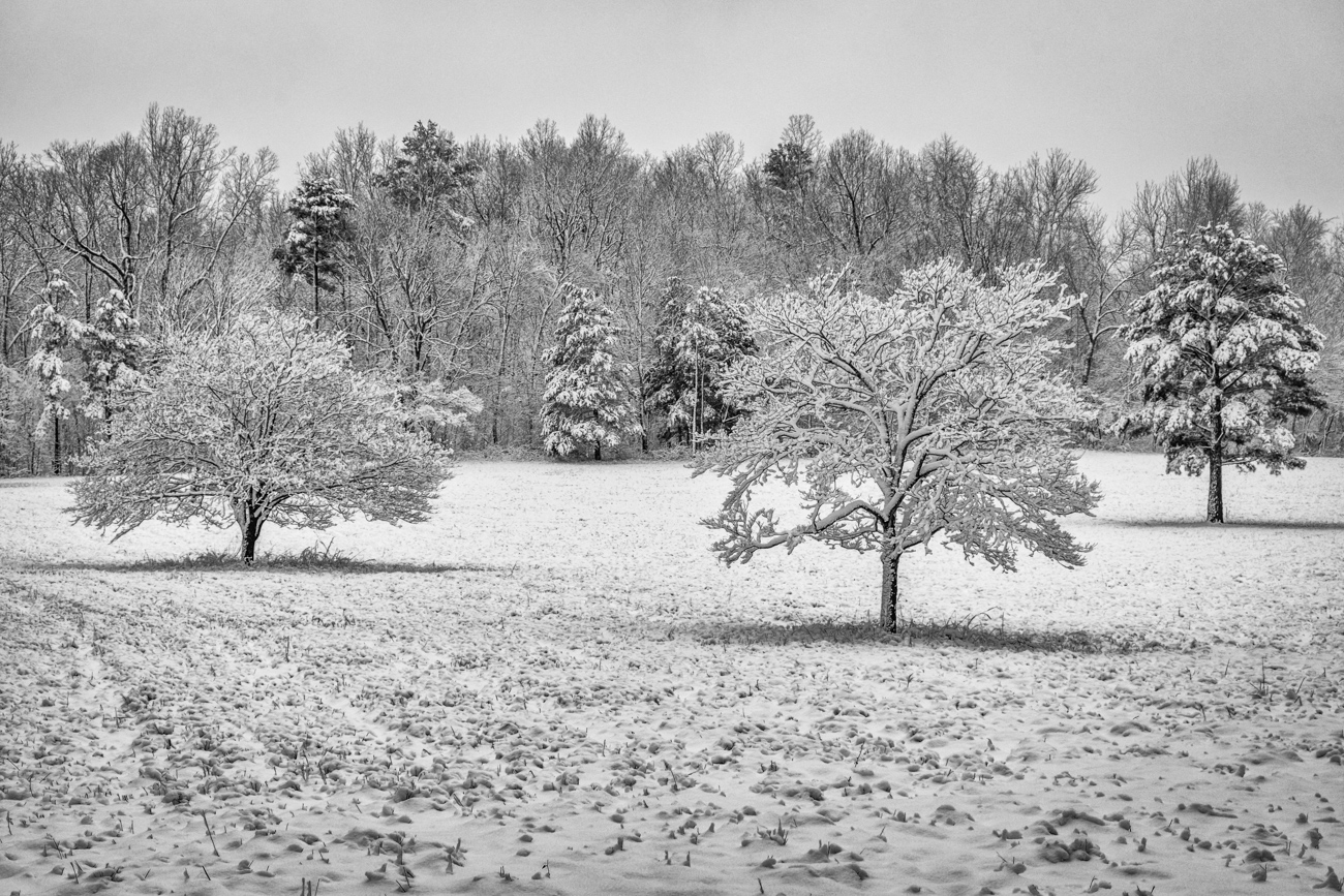 A snowy meadow on a January day in Newton County.